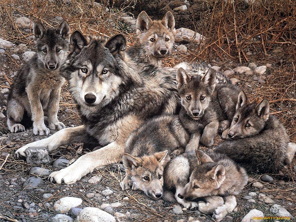 фото волчьей семьи большие игрушки несложно